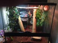 Full large terrarium set up
