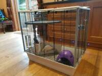 Rat cage and Rats