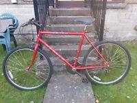 Unisex Bicycle + free expensive magnum lock