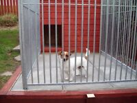 Large dog kennel and run.