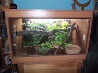 Full Vivarium Set Up for Arboreal Snake