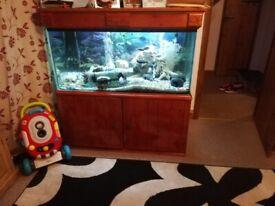 500 litre fish tank/aquarium everything included