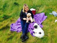 WANTED 2 or 3 bedroom dog friendly house to rent in Wiltshire/Somerset/Dorset, end Sep 17