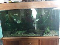 Complete aquarium set up for tropical fish