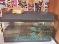 Jewel korallux 60 tank with heater pump and baby guppies