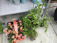 Garden Hardy Shrubs and Plants