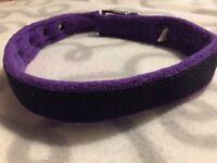 Fleece lined buckle dog collar