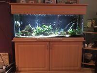"""SeaShell 'Elite' 51"""" x 16.5"""" x 48"""" Aquarium, Hood & Cabinet"""