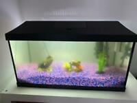 Leddy 60 Aquarium With Neon Tetra Fishes