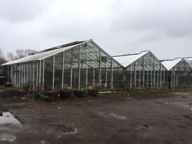 Glasshouses to rent near Ware, one or two adjacent greenhouses for cultivation and Nursery use