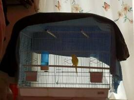 Hand tamed Budgie with large cage and food