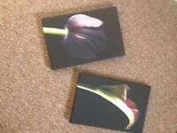 2 x Flower canvases
