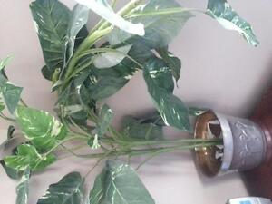 green artificial plant with pot