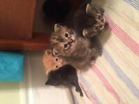 Free kittens to a good home.
