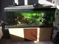 Fluval vicenza 240l aquarium fish tank including fish and accessories