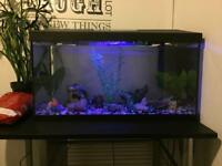 60l fish tank and all accessories + fish
