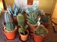 9 indoor plants 🌱