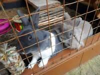 Bonded pair of rabbits