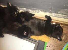 4 kittens ready for rehoming