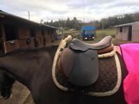 REDUCED DEVER cc jumping saddle