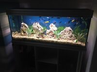 Fully complete tropical fish aquarium inc. display cabinet, outside pump and heater.