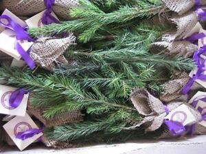 Tree Seedlings for Weddings, Earth Day, Birthdays, Promotions Downtown-West End Greater Vancouver Area image 5