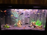 110L fish tank, which includes everything you need to get started!