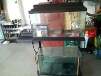 20 gallon fresh water fish tank with extra tank under stand.