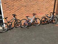 3 Adults Bikes