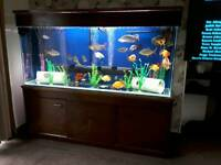 6ft tropical fish set up
