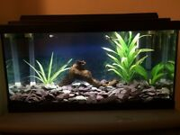TROPICAL FISH/ REPTILE TANK WITH ACCESSORIES £30 OR BEST OFFER