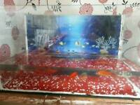 Fish Aquarium with fishes for sale. Very cheap