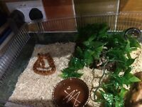 CORN SNAKE AND ALL EQUIPMENT