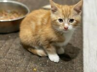 5 Beautiful kittens for sale