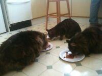 Cat Feeding Service