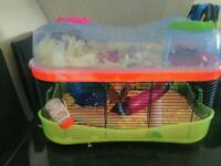 Hamster and home