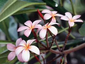 Sakura Massage - Traditional Thai Massage