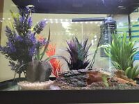 Tropical Fish Aquarium, complete set up kit