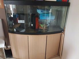 5FT fluval curved fish tank