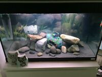 Fish tank and all you need plus fish