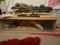 4 corn snakes with all equipment.
