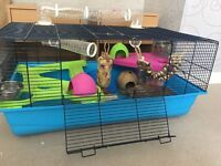 Hamster heaven cage with accessories