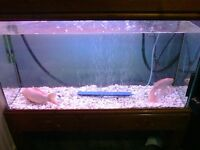 Huge cold water fish (NEED TO BE REHOMED ASAP) TANK ALSO FOR SALE