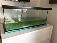 Terripin (turtle) tank full set up