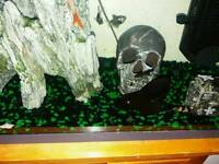 Fish tank with fish and accessories