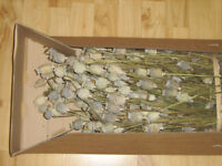 Large box of dried poppy pod heads (Ealing, London)