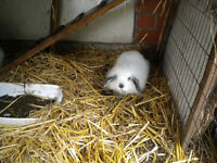 A Adorable Baby Rabbit Free To A Good Home