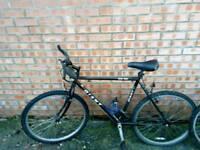 Free adult's bike