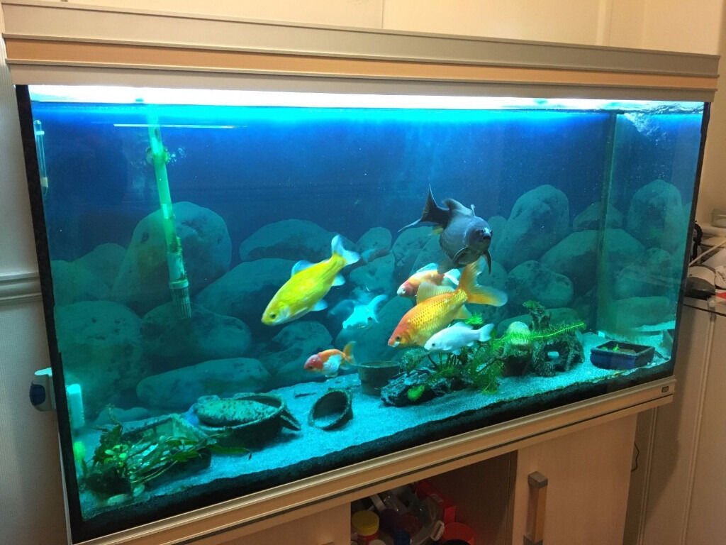 4 ft rena 350 litre fishtank in beech with matching for Aquarium 350 litres