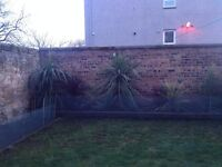Various colours and sizes of Cordyline plants for sale